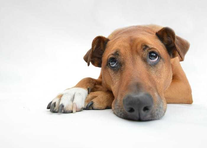 Tummy Troubles: Vomiting & Diarrhoea In Pets