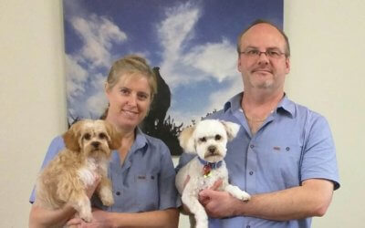 Grooming at Cannington Veterinary Hospital